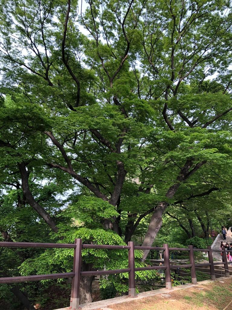 namsan park seul corea del sud